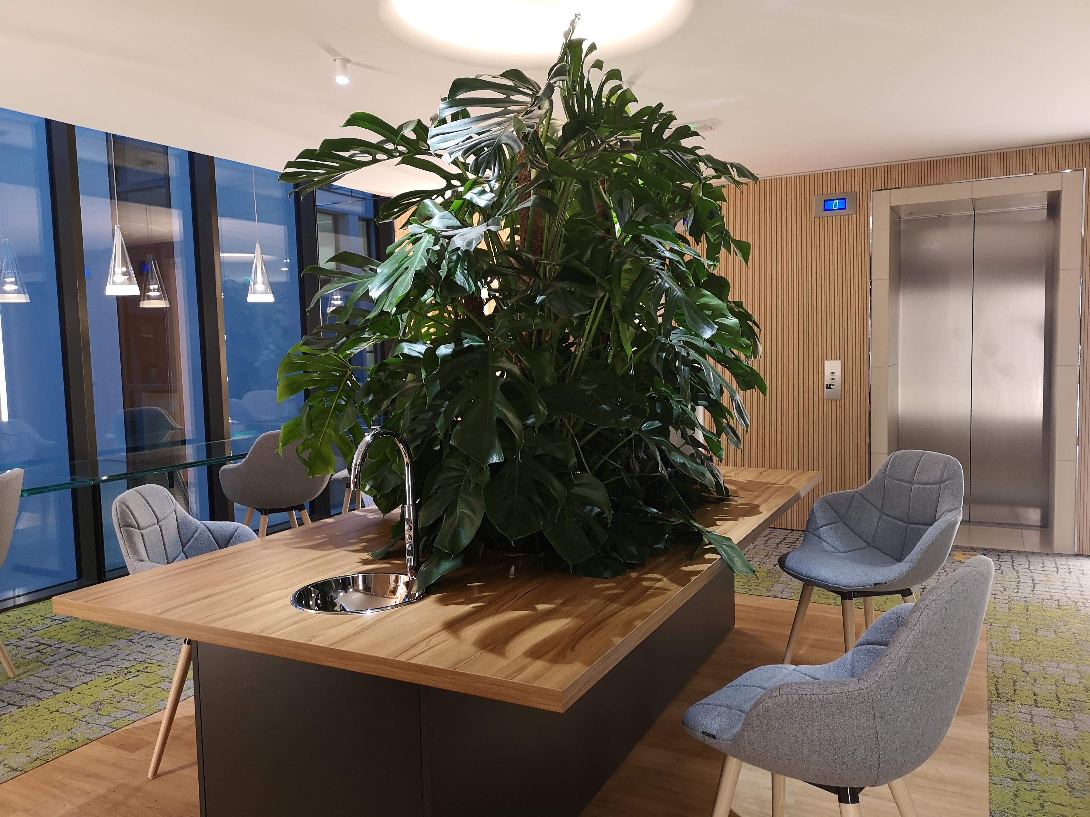 Végétalisation des espaces en entreprises. Plante dans un bureau.