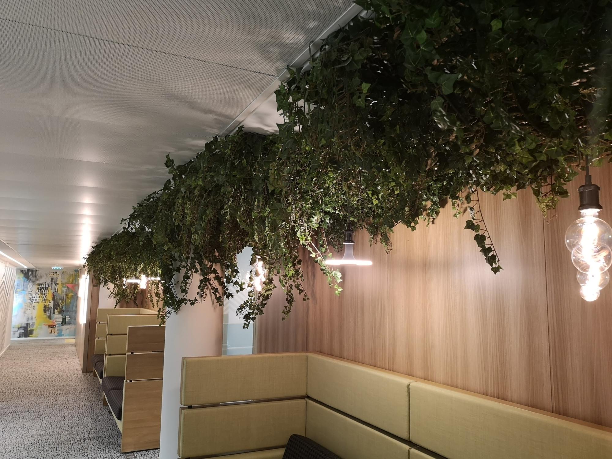 Végétalisation des espaces en entreprise. Plantes suspendues au plafond.